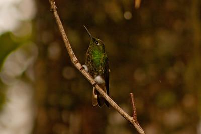 Journey into the Mountains 12: Bellavista Cloud Forest Reserve Journey into Ecuador