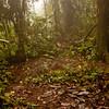 Journey into the Mountains 2: Bellavista Cloud Forest Reserve Journey into Ecuador