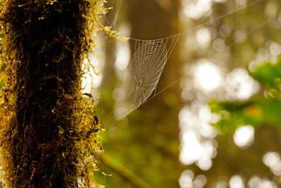 Journey into the Mountains 7: Bellavista Cloud Forest Reserve Journey into Ecuador