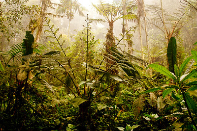 Journey into the Mountains 10: Bellavista Cloud Forest Reserve Journey into Ecuador