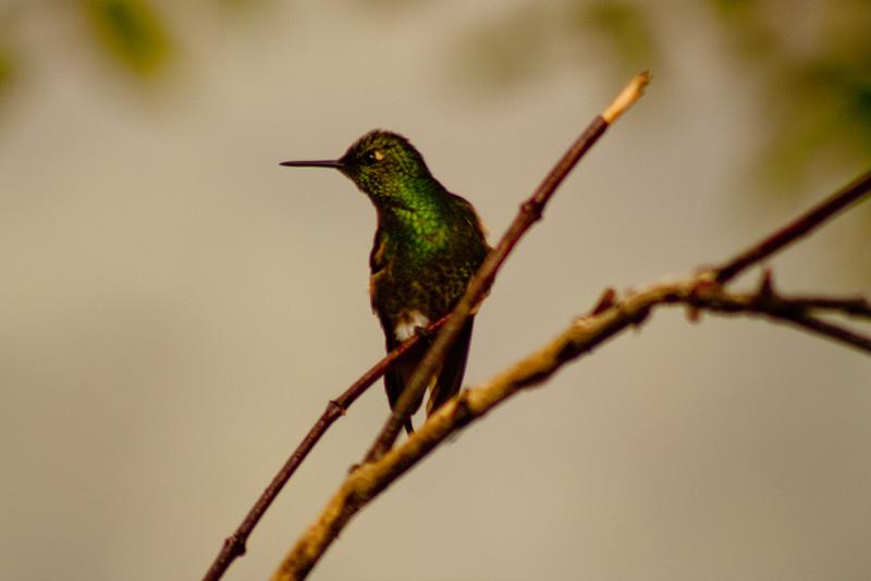 Journey into the Mountains 13: Bellavista Cloud Forest Reserve Journey into Ecuador