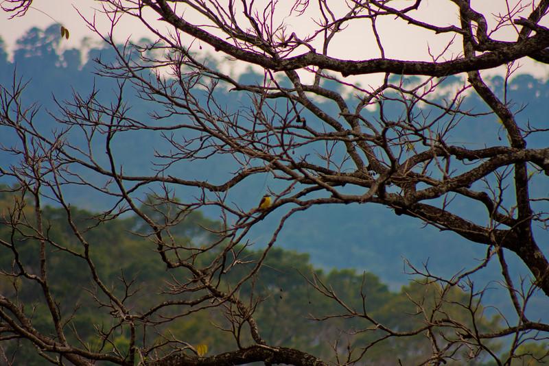 Nature in Chiapas 2:Journey into Chiapas Mexico