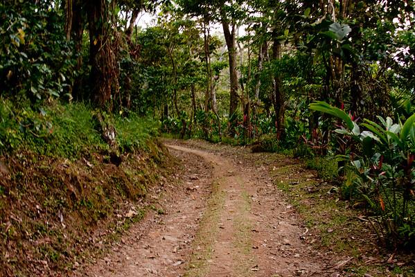 Nature in Chiapas 13:Journey into Chiapas Mexico
