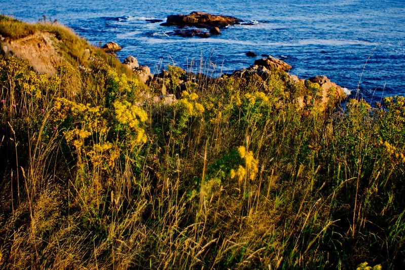 Above the Water in the Grass in Cape Breton Nova Scotia