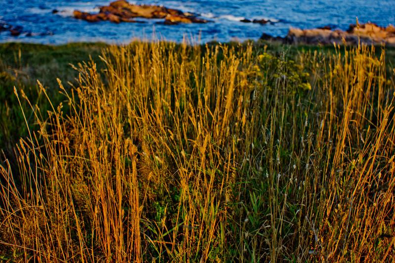 Grass During a Sunset in Cape Breton in Nova Scotia