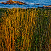 Grass During a Sunset in Cape Breton in Nova Scotia