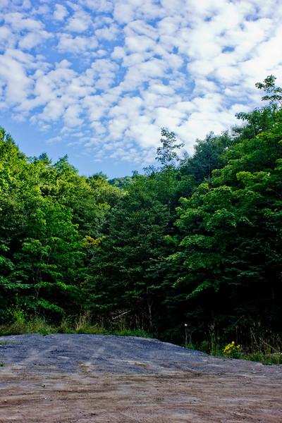 Trees Around the Road in Cape Breton Nova Scotia