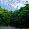 Trees Around the Road in Cape Breton Nova Scotia