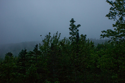 Fog and Forest in Nova Scotia