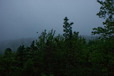 Fog and Forest in Nova Scotia