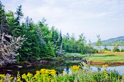 Trees and Water in Cape Breton Nova Scotia