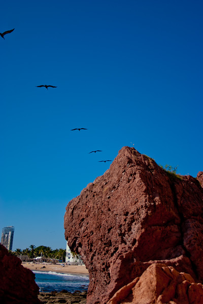 Pelicans Returning Home Overhead in Mexico