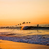Pelicans Over the Wave in Mexico