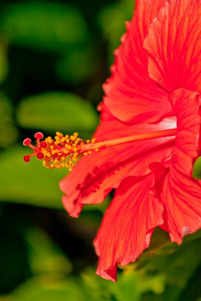 Open Red Flower