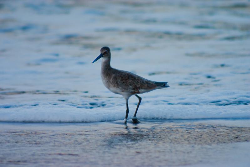 Bird of the Ocean in Mexico
