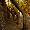 Tree Shelter on the Side Walk in Mexico City