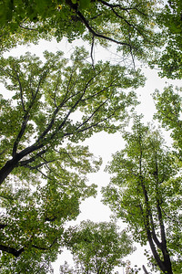 Forest Canopy Texture
