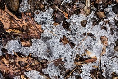 Ice & Leaves
