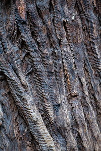 Bark Waves