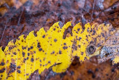 Leaf Saw
