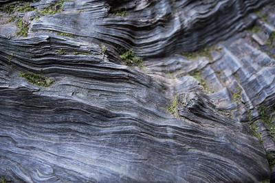 Bark Lines