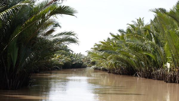 Mekong Delta Impressions