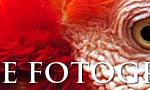 banner-fotoanimal-728x90c