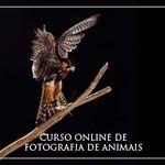 banner-curso3-336x280