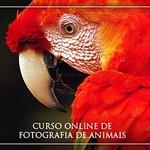 banner-curso4-336x250