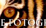 banner-fotoanimal-728x90b