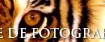 banner-fotoanimal-468x60