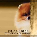 banner-curso5-336x280