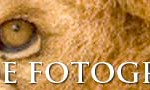 banner-fotoanimal-728x90a