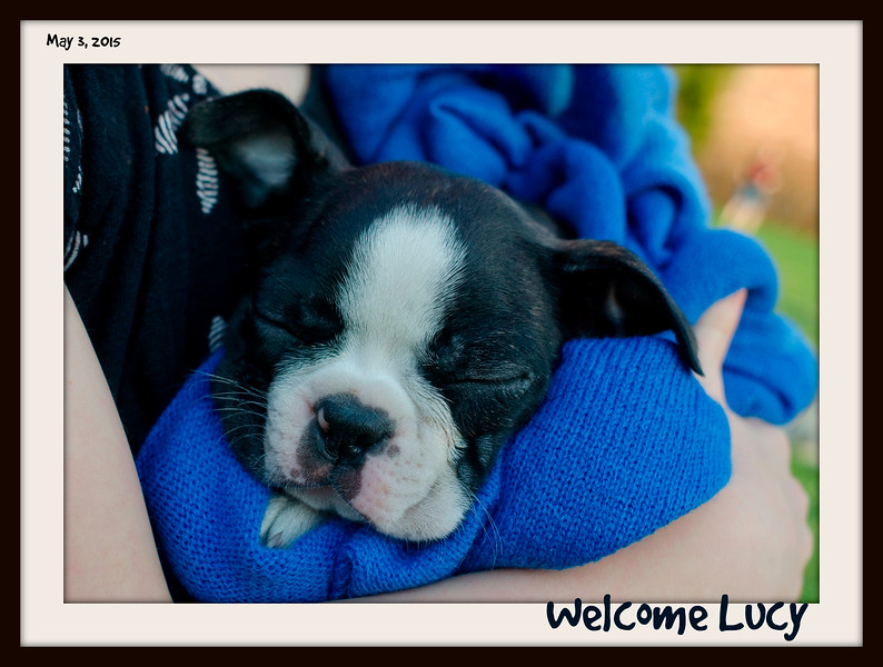 welcome lucy