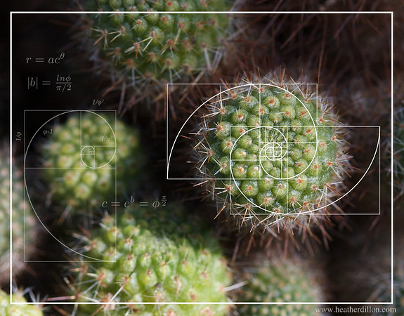 Cactus Calculus. I met a biologist once who told me that plants often use the golden ratio to optimize patterns of leaf growth. In the cactus you can see the golden spiral spinning outward.