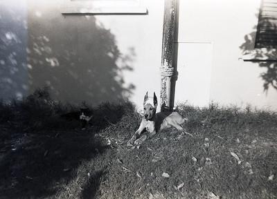 011 K - Fontana 1953