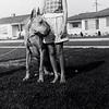 20 - Duke and neighbor