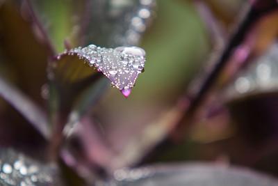 Liquid Diamonds