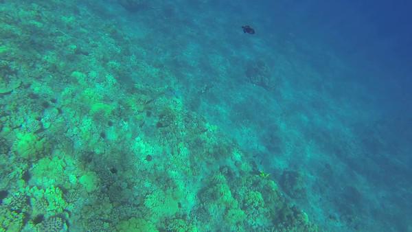 Underwater snorkeling video