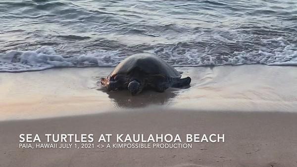 2021 07 01 Sea Turtles Kaulahoa Beachh