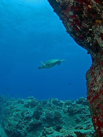 Maui Diving