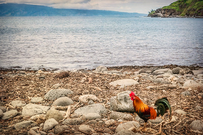 Beach Chicken, Maui, Hawaii