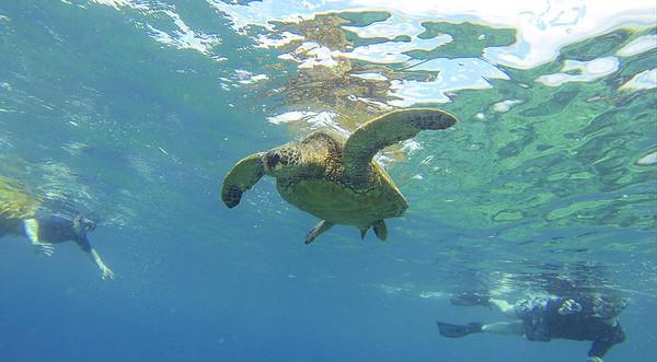 Maui Kayaks with Trish