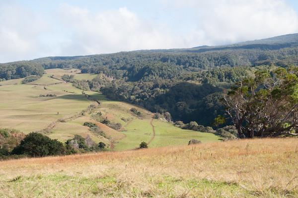 5231 Twin Koas Hike - Piiholo Ranch Zipline