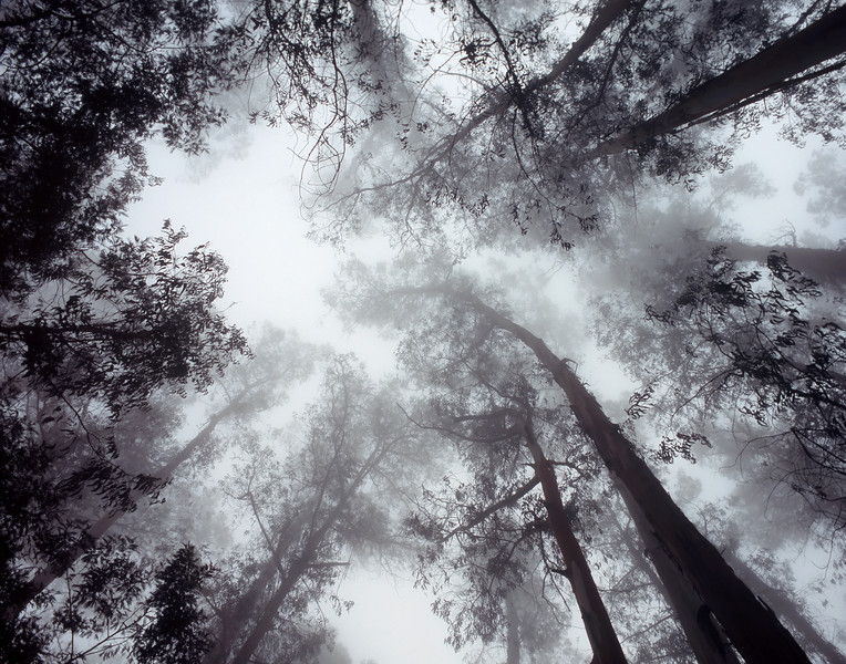"<p></p><div id=""centered_description"">Fog and Trees, Kula</div>"