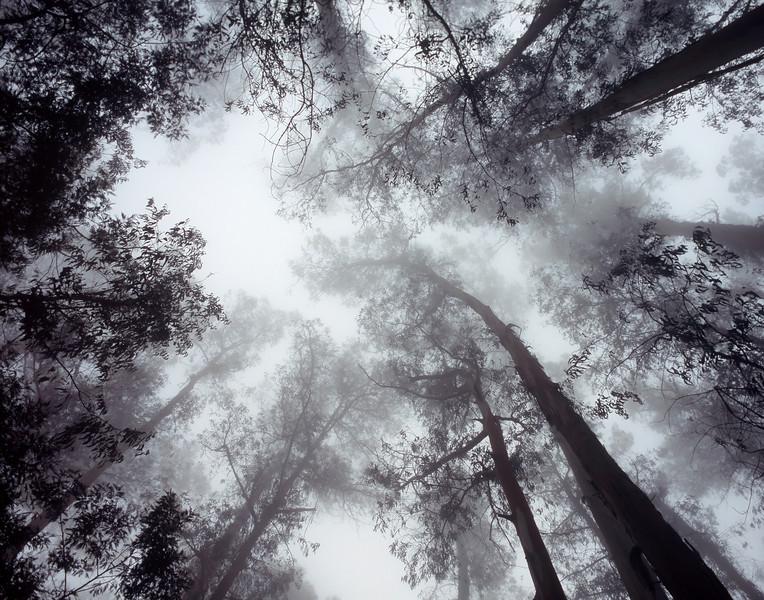 "<p></p><div id=""centered_description"">Fog and Trees, Kula</div>"