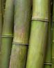 "<p></p><div id=""centered_description"">Bamboo, Hana Highway</div>"