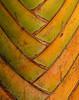 """<p></p><div id=""""centered_description"""">Pacific Palm, Lahaina </div>"""