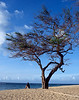 "<p></p><div id=""centered_description"">Baldwin Beach, Paia</div>"