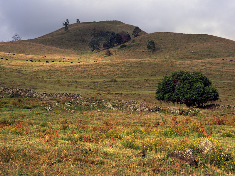 "<p></p><div id=""centered_description"">Upcountry Pasture, Ulapalakua </div>"